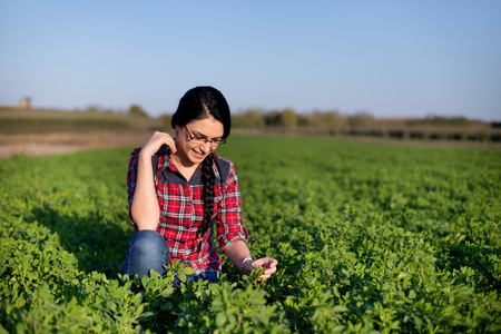 girl squatting: Pretty young farmer girl squatting in green alfalfa field and looking at leaves