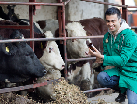 animal health: Young smiling veterinarian preparing vaccine for cattle on farmland