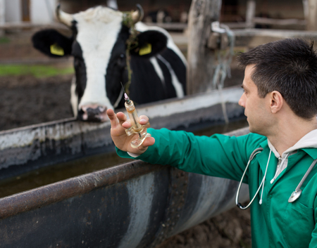 Young happy veterinarian holding syringe and looking at bull on farm