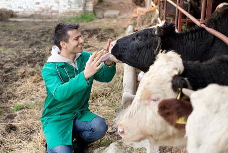 Young happy veterinarian holding syringe and cuddle bull on farm Banque d'images