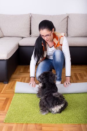 disturbing: Young woman rolling carpet for cleaning while dog is disturbing her by playing Stock Photo