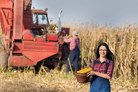 cereals holding hands: Young farmer girl holding basket with corn cobs in the field. Harvester in background