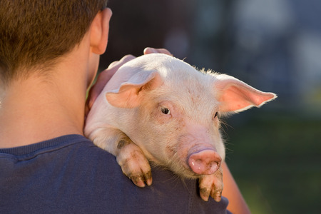 Young farmer holding cute piglet on his shoulder