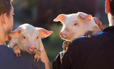 자신의 어깨에 귀여운 새끼 돼지를 들고 두 젊은 농부