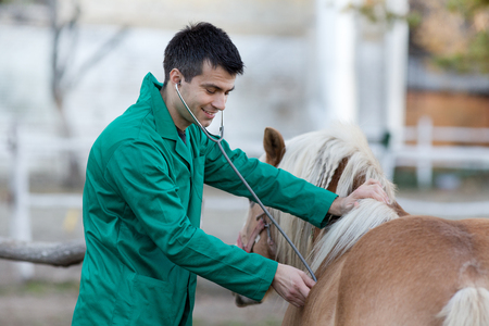 Young veterinarian examining pony horse with stethoscope on the ranch