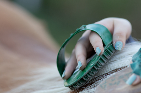 scrubbing up: Close up of female hands grooming horse on the ranch Stock Photo