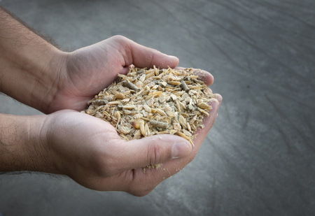 Close up of farmers hand holding compound cattle feed in palms