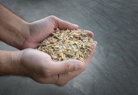 Dichten van landbouwer hand houden verbinding veevoer in palmen