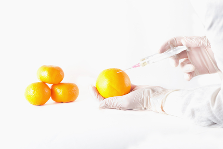 transgenic: Close up of scientists hands with protective gloves holding orange fruit and applying injection. GMO concept