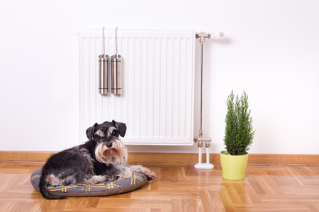 Good indoor climate concept. Dog lying on the pillow in front of radiator with water containers for steam
