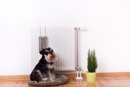 Good indoor climate concept. Dog sitting on the pillow in front of radiator with water containers for steam Standard-Bild
