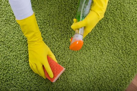 spray bottle: Top view of female hands with protective gloves cleaning carpet with sponge and liquid detergent from spray bottle