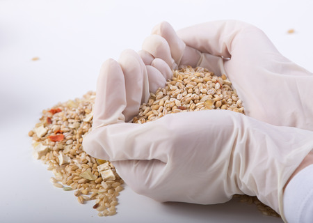 cereals holding hands: Close up of different grains in researchers hands with gloves shaping heart Stock Photo