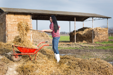 muck: Young pretty country woman working on the farmland, loading wheelbarrow with animal manure and straw
