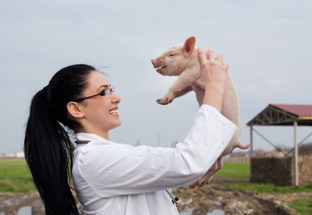 Young happy veterinarian girl raising piglet high in the air on the farm Standard-Bild