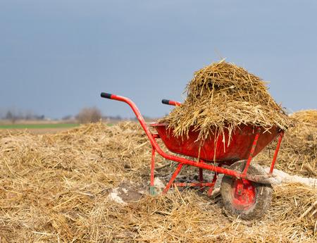 Brouette avec naturel fumier de bovins sur les terres agricoles