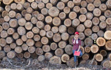 forestry: Young woman forestry engineer standing in front of wooden trunks and talking on phone Stock Photo