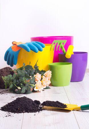 Bepflanzung und Gartenkonzept. Bunte Blumentöpfe, Pflanzen und Gartengeräte auf hellem Holzboden