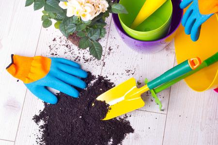 Draufsicht von eingemachten Rosen, von bunten Blumenplastiktöpfen und von Gartenarbeitwerkzeugen auf hellem Bretterboden. Pflanzkonzept