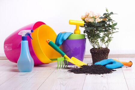 Bepflanzung und Gartenkonzept. Bunte Blumentöpfe, Pflanzen und Gartengeräte auf hellem Holzboden Standard-Bild