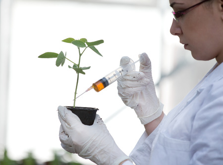white coat: Young woman biologist in white coat pouring liquid from syringe into flower pot with sprout in greenhouse Stock Photo