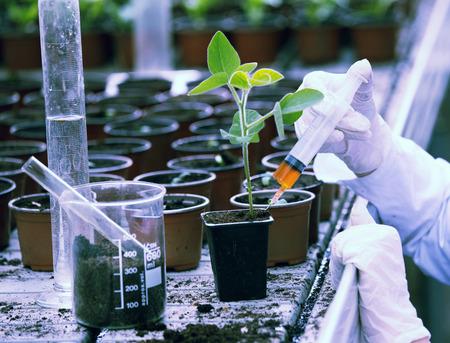 bata blanca: El biólogo en la capa blanca que vierte el líquido de la jeringa en el crisol de flor con el brote en invernadero Foto de archivo