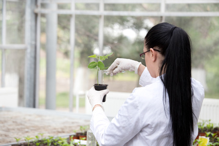 Young woman biologist in white coat pouring liquid from test tube into flower pot with sprout in greenhouse Reklamní fotografie