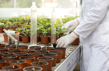 Close up of scientist's hands with protective gloves holding sprout and test tube in greenhouse