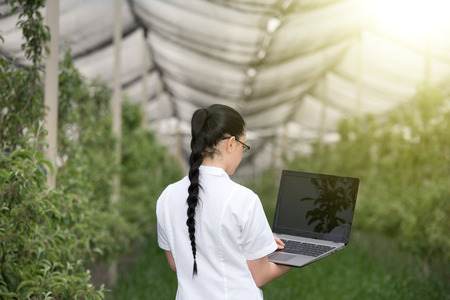 agronomist: Rear view of young agronomist with laptop in apple orchard with anti hail net above Stock Photo