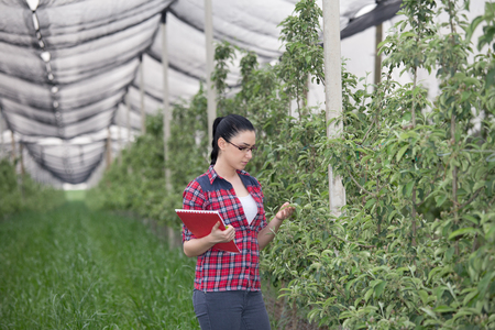 observing: Young pretty farmer woman observing apple trees in modern orchard Stock Photo