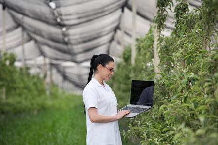 agronomist: Young woman agronomist with laptop in apple orchard with anti hail net above
