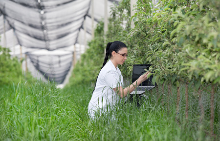 agronomist: Young agronomist with laptop in apple orchard with anti hail net above