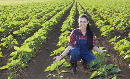 en cuclillas: agricultores chica joven feliz en cuclillas en el campo de girasol y mostrando hojas agradables en verano temprano Foto de archivo