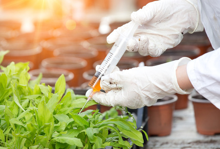 white coat: Biologist in white coat pouring liquid from syringe into flower pot with sprout in greenhouse Stock Photo