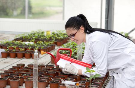bata blanca: Mujer joven en la capa blanca de crecimiento investigación de brotes en macetas en invernadero