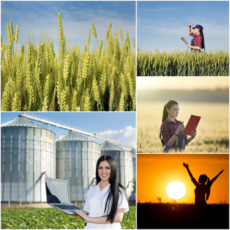 agricultural engineering: Food industry and farming concept. Collage of images showing young farmer girl and scientist in wheat field in different situations Stock Photo