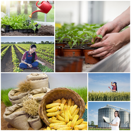Food industry and farming concept. Collage of images showing young farmer girl and scientist in wheat field in different situations Stock Photo