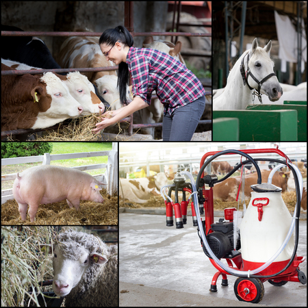 animal breeding: Farming and animal breeding concept. Collage of farm animal images with young pretty farmer taking care of them