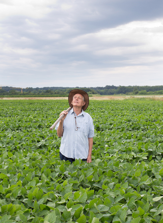 hayfork: Agricultural and food concept. Old peasant standing in soybean field and carrying hayfork