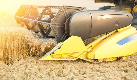 barley head: Close up of combine harvester head cutting golden barley crop in summer