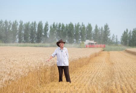 cosechadora: granjero hombre mayor con el sombrero que se coloca en campo de trigo maduro, mientras que Cosechadora trabajan en segundo plano
