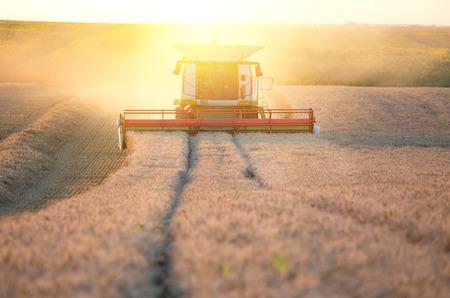 Combine harvester threshing wheat in fertile plains at sunset