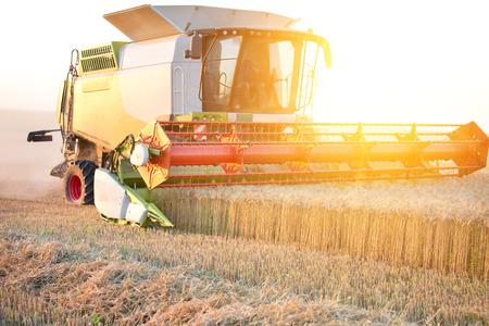 plains: Combine harvester threshing wheat in fertile plains Stock Photo