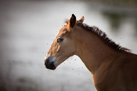 Portrait of young horse with large group of flies on his face and around him