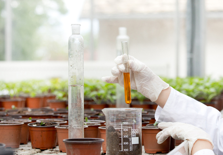 biologist: Biologist in white coat holding test tube with orange liquid over flower pots in greenhouse