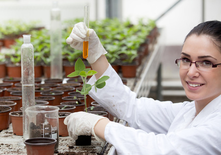 Young woman biologist in white coat pouring liquid from test tube into flower pot with sprout in greenhouse