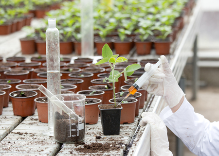 bata blanca: Biologist in white coat pouring liquid from syringe into flower pot with sprout in greenhouse Foto de archivo