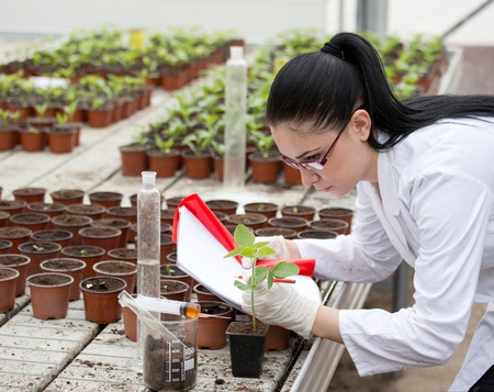 bata blanca: Young woman in white coat researching growth of sprouts in flower pots in greenhouse