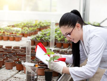 Young woman in white coat researching growth of sprouts in flower pots in greenhouse