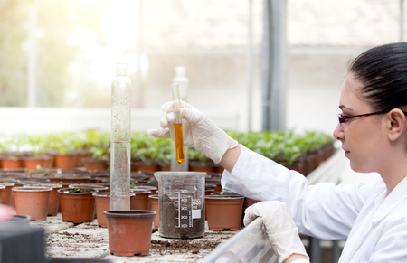 biologist: Young woman biologist in white coat holding test tube with orange liquid over flower pots in greenhouse Stock Photo